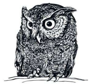 owl-drawing.jpg#asset:1053